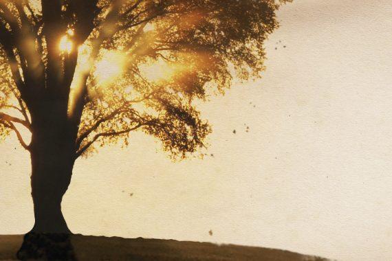 Sunset through tree silhouette
