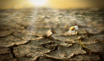 A single flower growing in a desert.