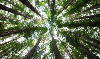 Stewarding Shade Trees