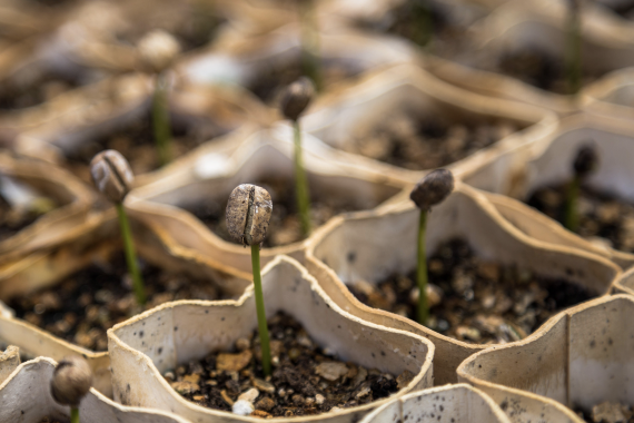 Leveraging Philanthropy to Seed Medical Science Research